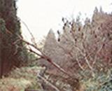 国営田沢疏水農業水利事業 改修前の幹線水路