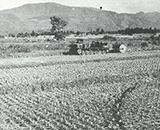 国営事業開始 開田地のトラクターによる床締作業(長信田地区)