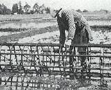 入植開拓の歴史 第一暁開拓 女手で型つけ作業 昭和27年6月