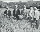 入植開拓の歴史 新興、千本野開拓 通水直後の稲のみのり 昭和30年 左端小松元理事長